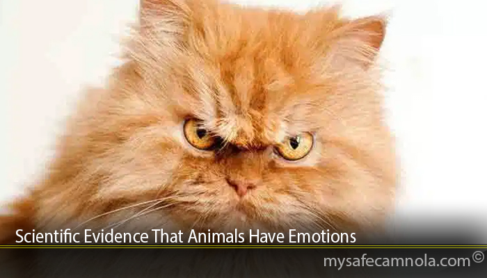 Scientific Evidence That Animals Have Emotions