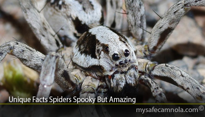 Unique Facts Spiders Spooky But Amazing
