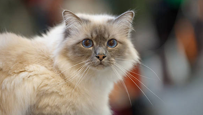 Types of Cats to Keep