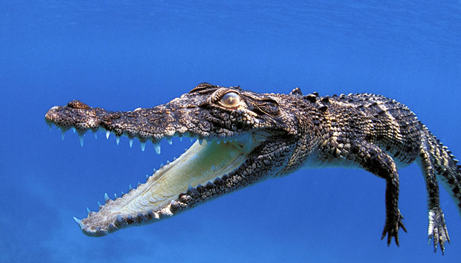 Get to Know the Deadliest Animals in the World