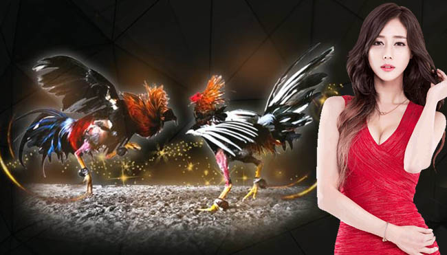 The Best Feed for Fighting Chickens in Cockfighting Betting