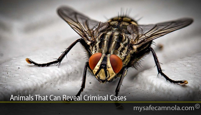 Animals That Can Reveal Criminal Cases